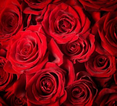 Red Roses background. Selective focus