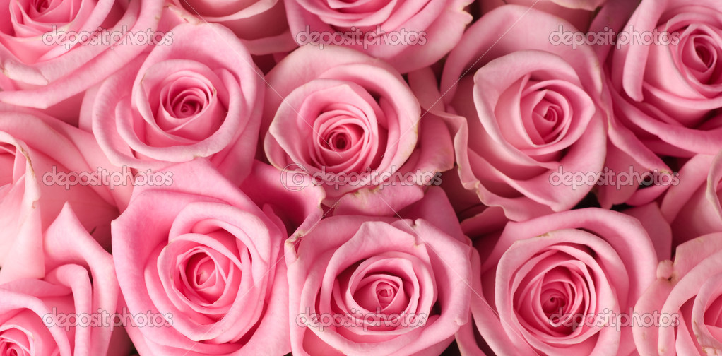 rosa rosen hintergrund stockfoto subbotina 10682604. Black Bedroom Furniture Sets. Home Design Ideas