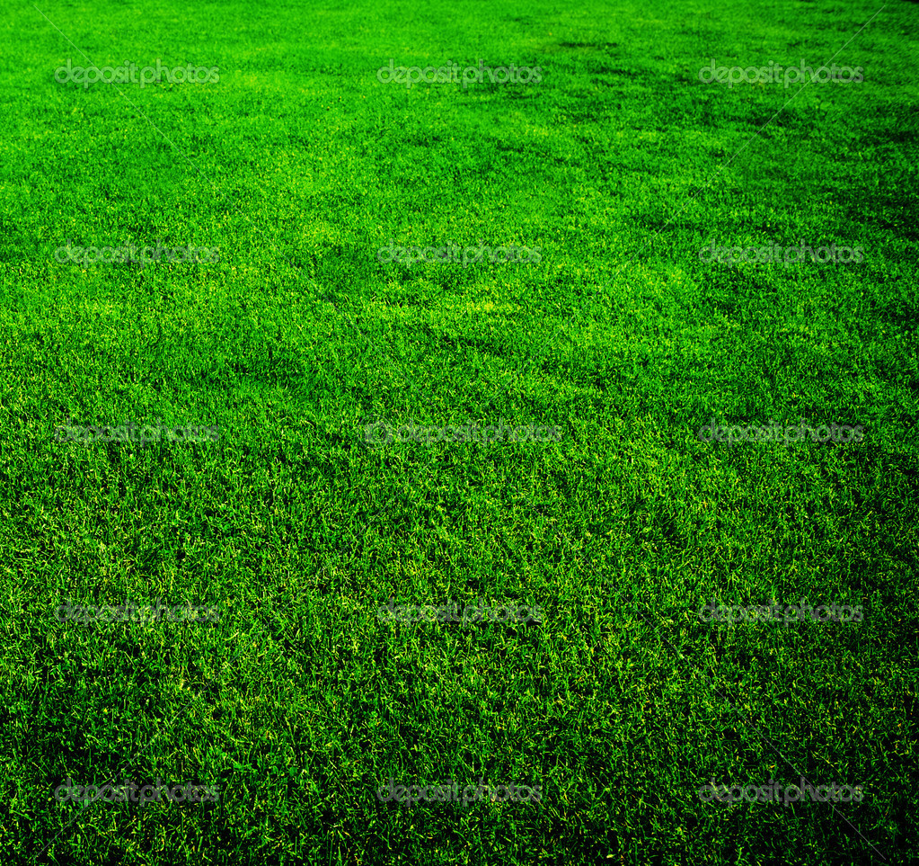 Beautiful grass background stock photo subbotina 10683975 for Pretty grass