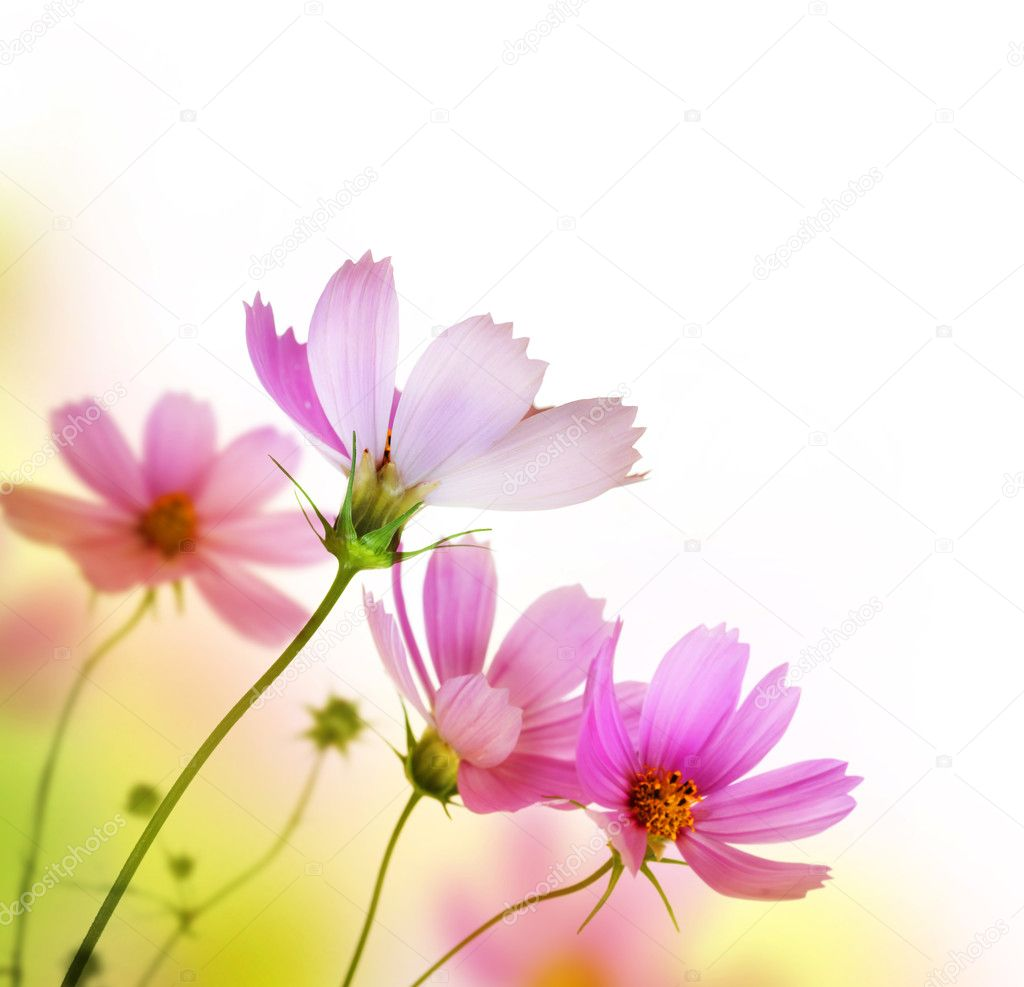 Beautiful Floral Border Flower Design Stock Photo