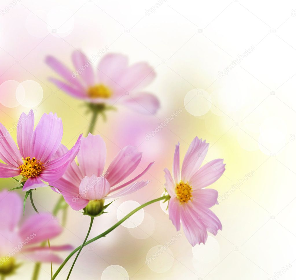 Beautiful flowers border floral design over white stock photo beautiful flowers border floral design over white photo by subbotina izmirmasajfo