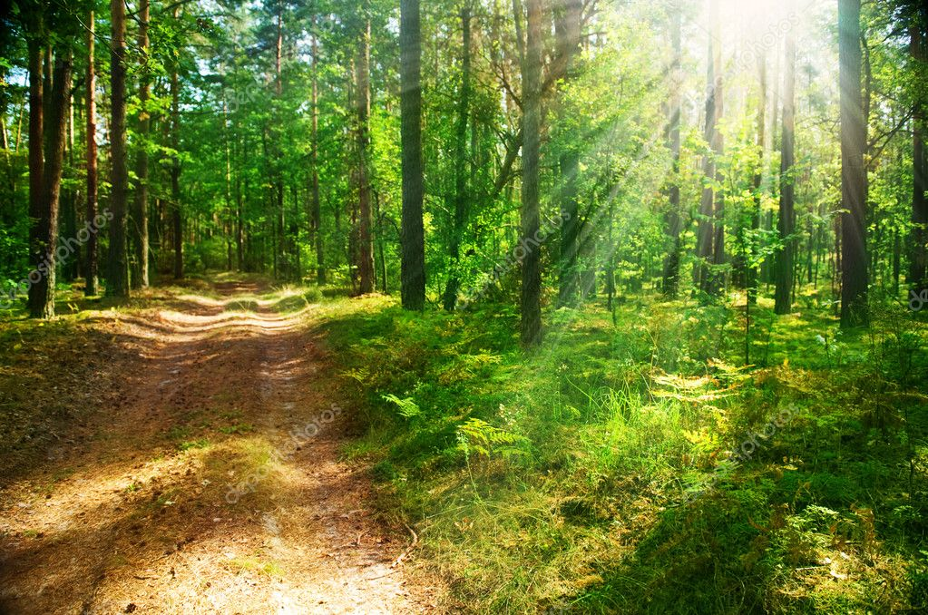 Фотообои Misty Old Forest