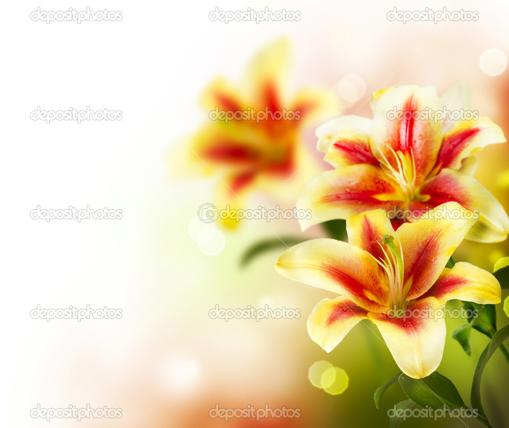 Lily flowers border designspring flowers stock photo lily flowers border designspring flowers stock photo 10687753 dhlflorist Images