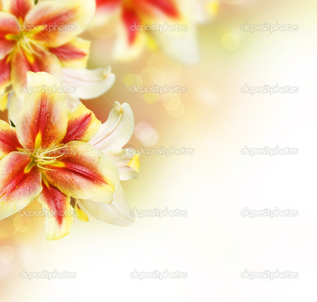 Lily flowers border designmmer flowers stock photo lily flowers border designmmer flowers stock photo 10687759 dhlflorist Images