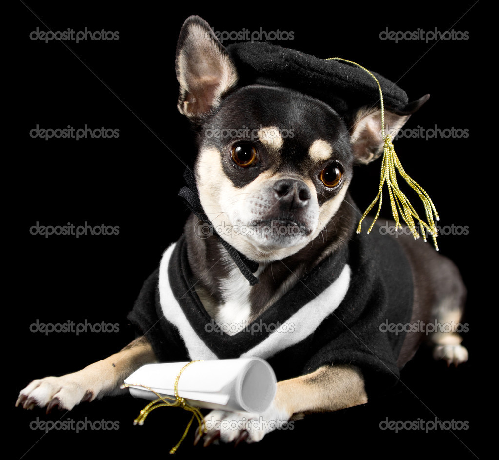 Graduation Dog — Stock Photo © wpd911 #10268124
