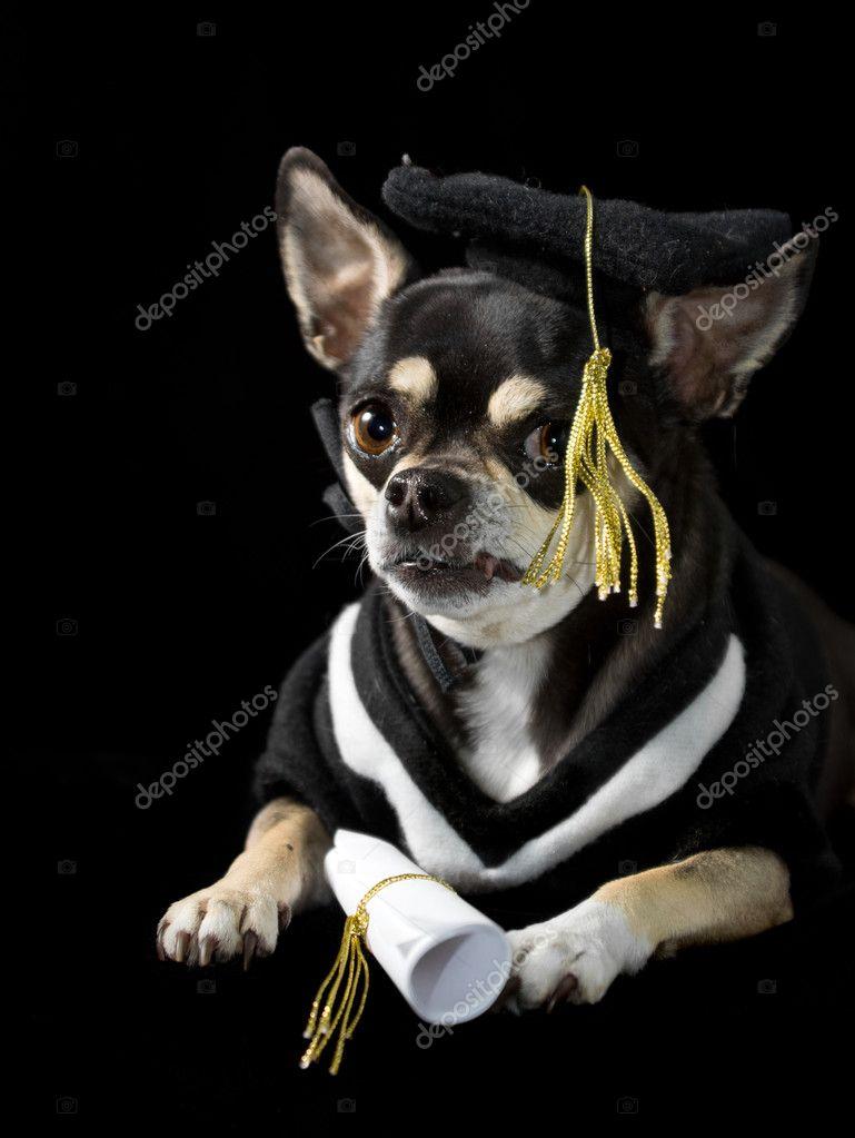 Graduation Dog — Stock Photo © wpd911 #10268133