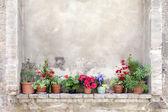Fotografie Blumentöpfe auf einer alten Mauer in der Toskana