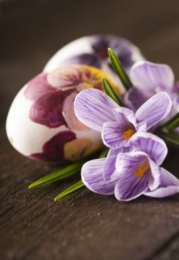 Painted eggs and crocus on Easter