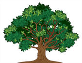 Photo Vector oak tree
