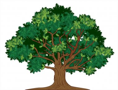 Vector illustration of old green oak tree stock vector