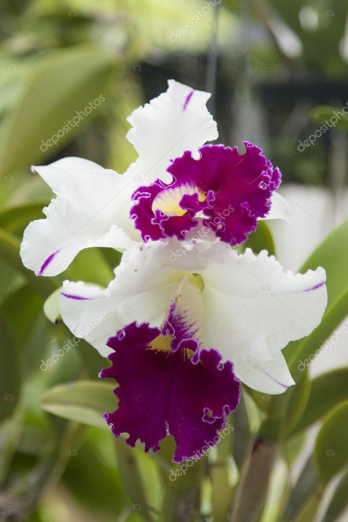 Beautiful fresh flowers in a garden