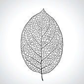 Fotografie Černá makro listy přirozené izolovaný. vektorové ilustrace