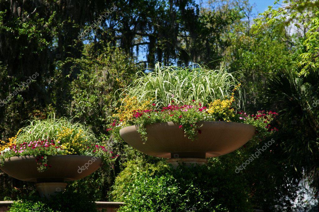 Blumen in Jacksonville Florida Zoo — Stockfoto © KevinWrites #9788203