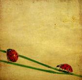 krásné pozadí obrázek berušky a květinové prvky. užitečné designový prvek