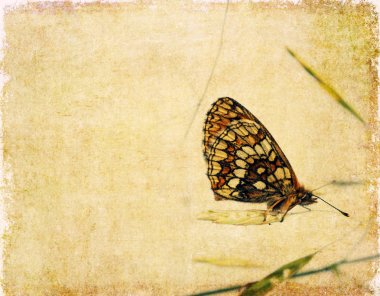Lovely background image with close-up of a butterfly
