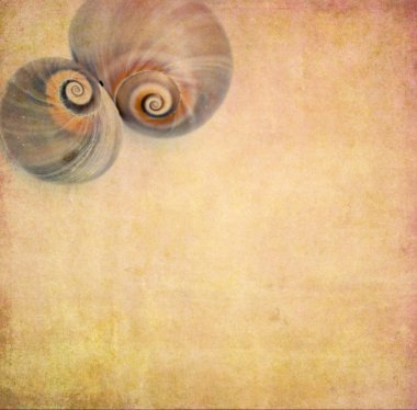Lovely background image with sea shells up close. useful design element