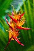 Fotografie Rajka květ