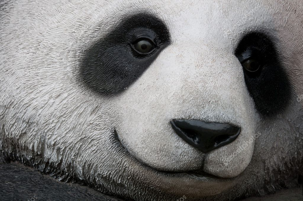 Close up of panda