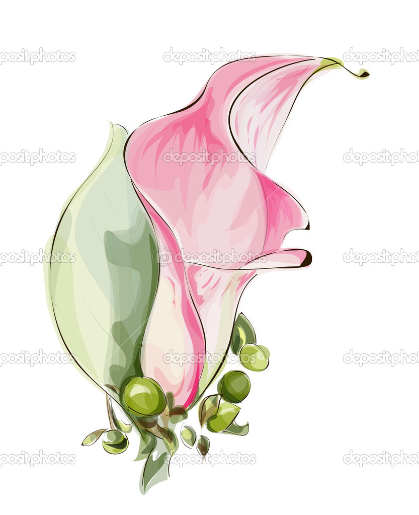 Pink Calla.