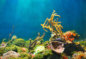Photo Colorful underwater world