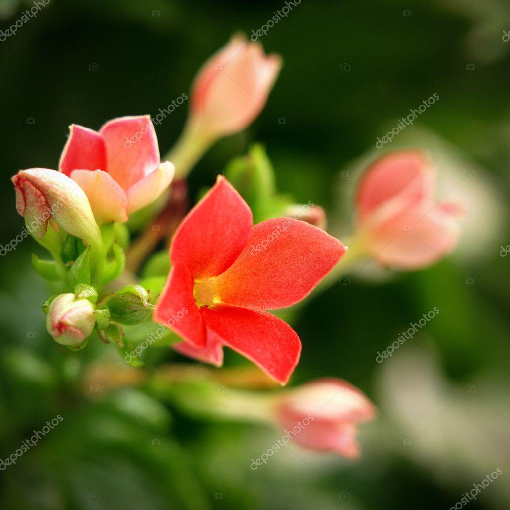 Lotto di piccoli fiori foto stock tlakic 9815341 for Piccoli disegni di casa lotto