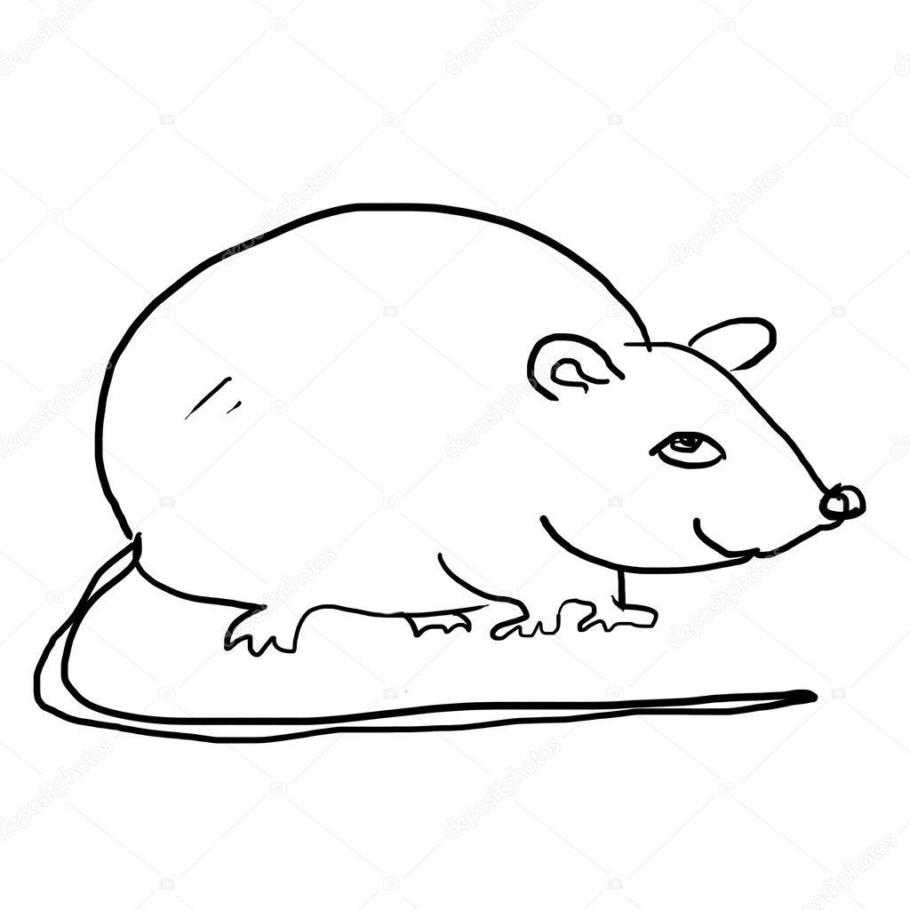 Dessin de rat sur le blanc photographie rateland 10220880 - Dessin d un rat ...