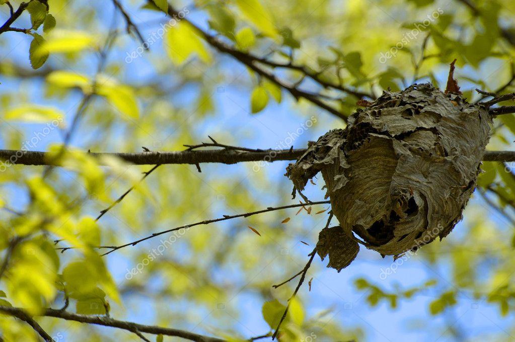 Nest with Vivid Tree Canopy