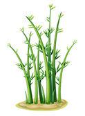 Fotografia bambù