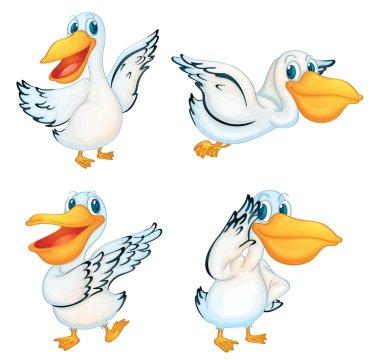 Pelican series