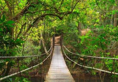"Картина, постер, плакат, фотообои ""мост в джунгли, национальный парк кхао яй, таиланд картины"", артикул 9932001"