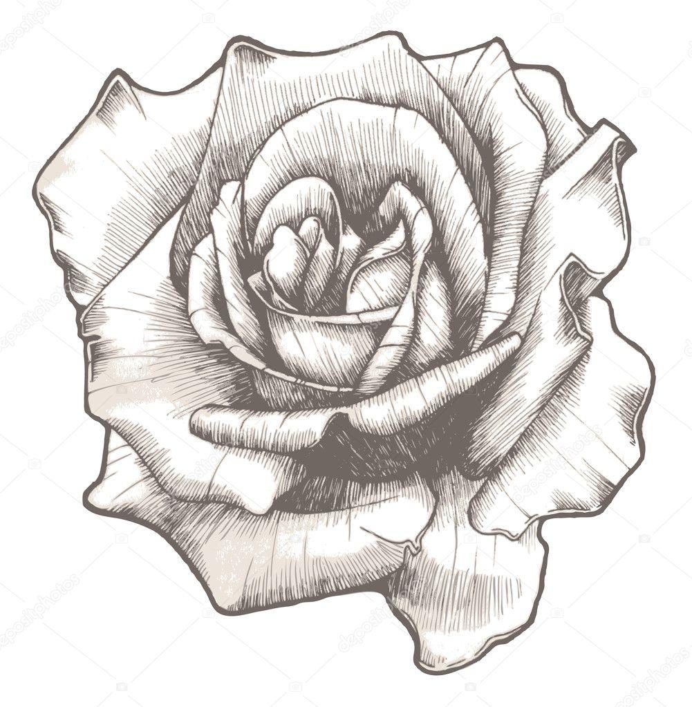Hand Drawn Rose Stock Vector 169 Designious 10711612