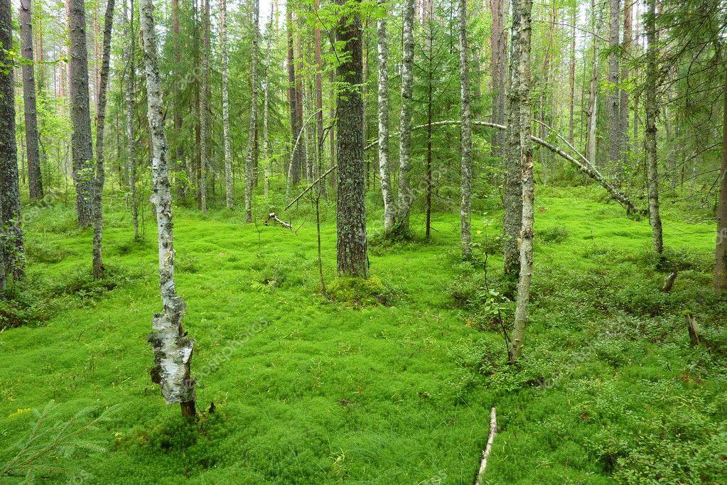 Великое болото фото вологодская область
