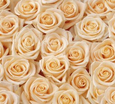 Cream roses seamless pattern