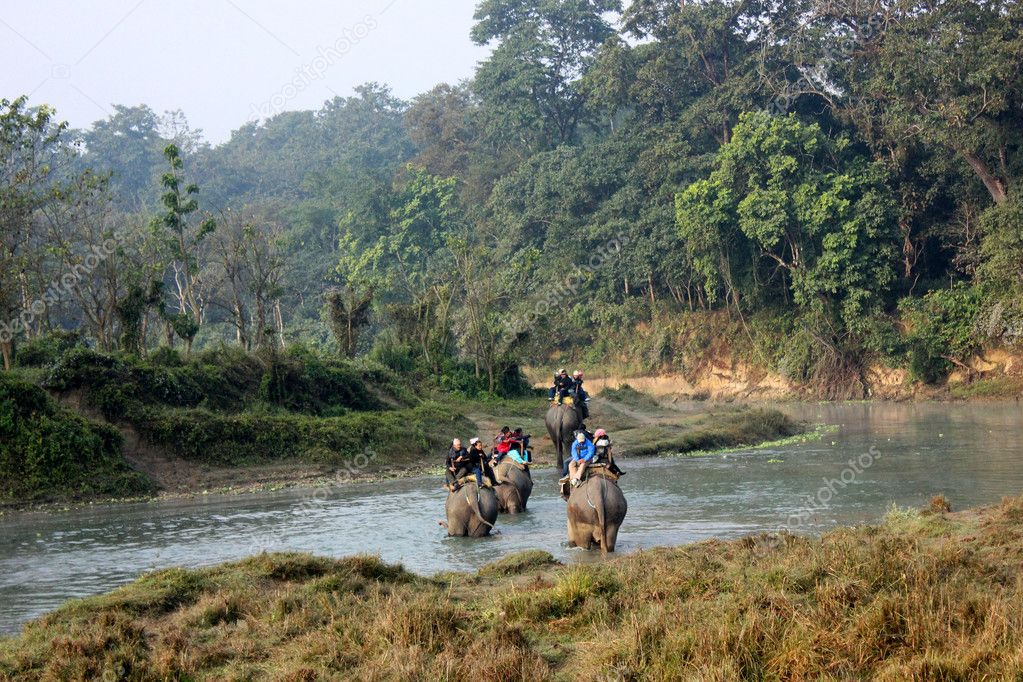 Elephant ride throught the jungle, Chitwan