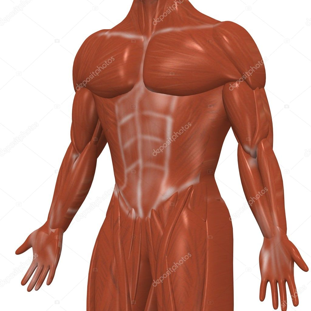 músculos humanos — Foto de stock © 3drenderings #10075632