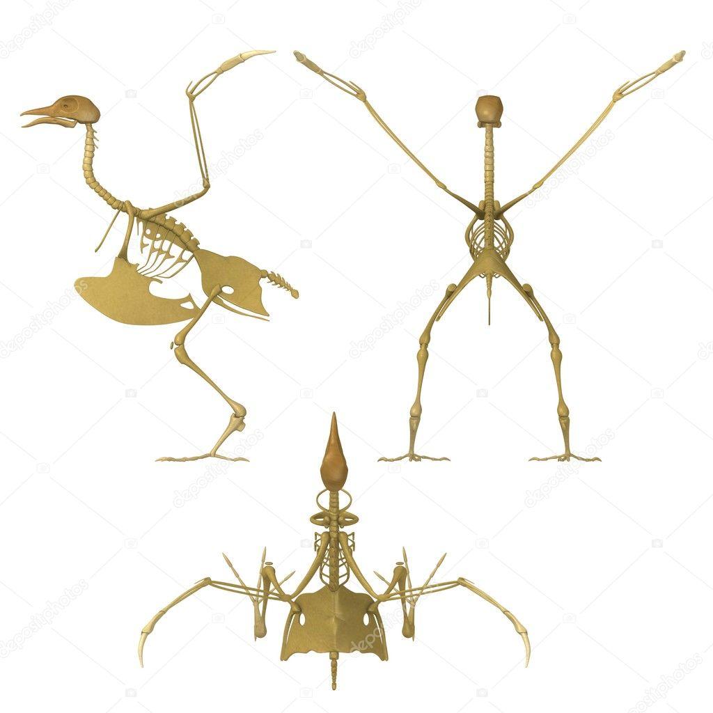 3d render of bird skeleton — Stock Photo © 3drenderings #10696646