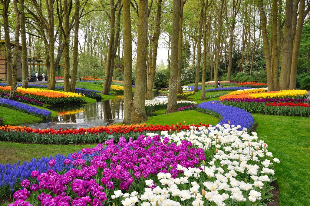 Colorful blossing tulips in Keukenhof park in Holland