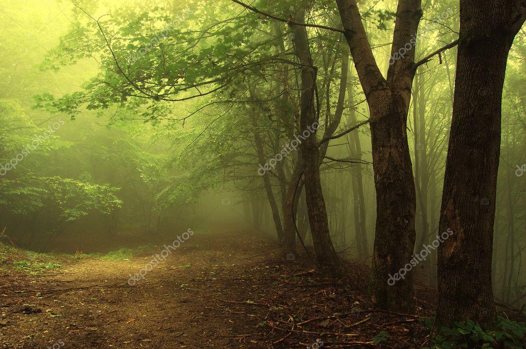 Фотообои Green forest with fog