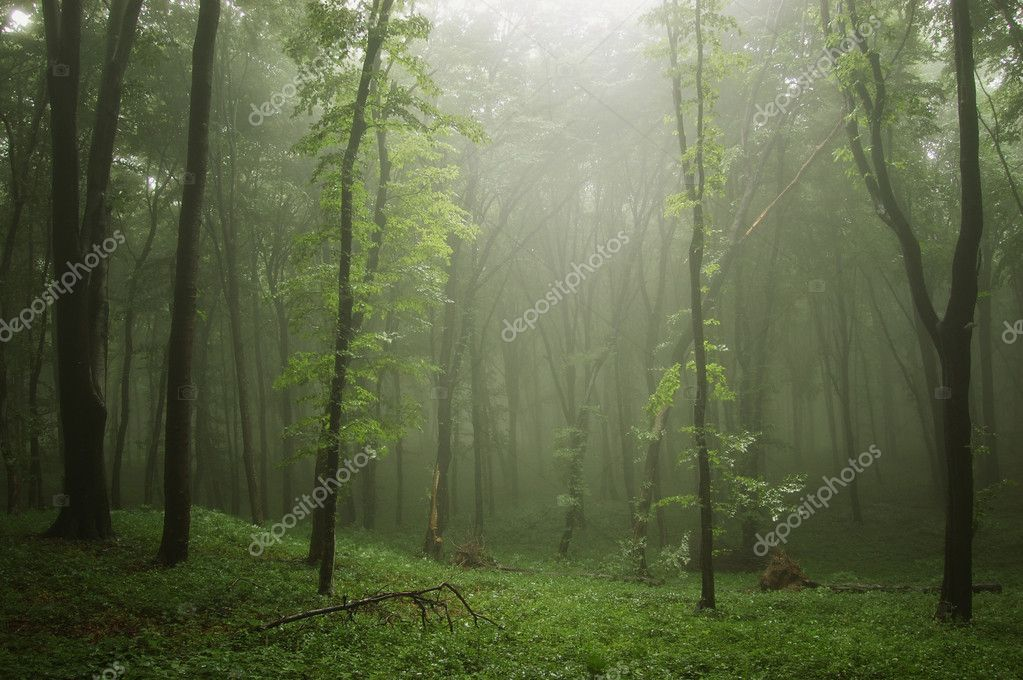 Фотообои Mist in a green forest with trees in a ray of light