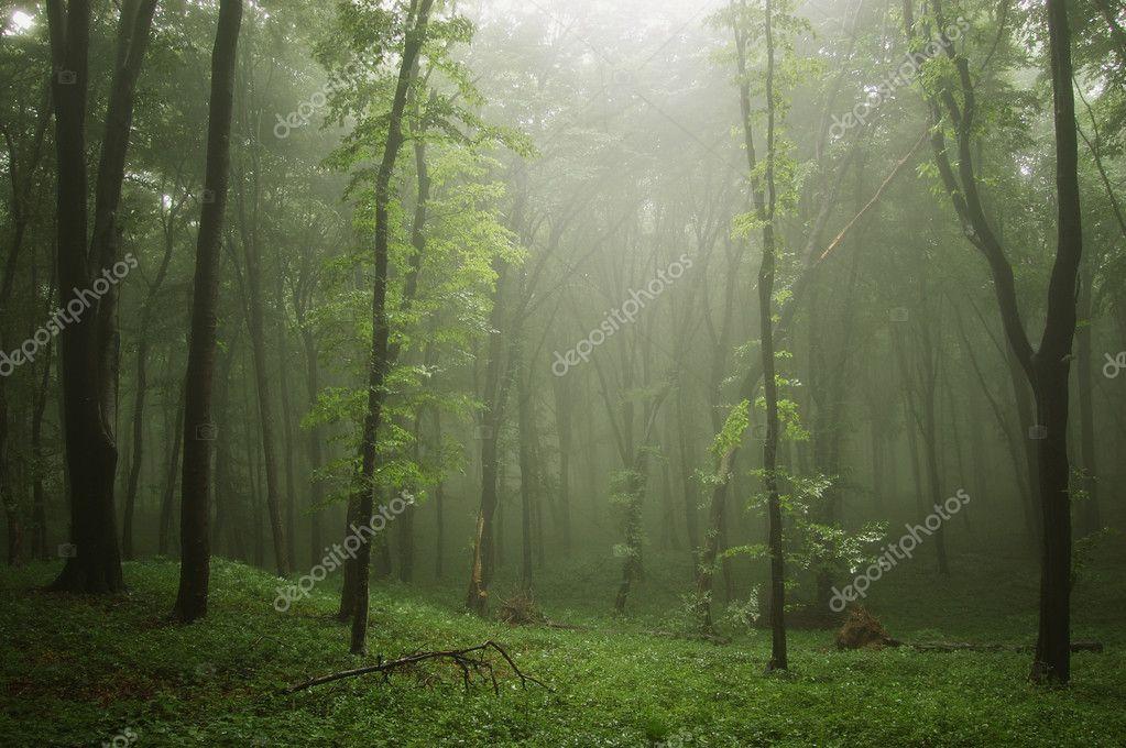 Фотообои Туман в зеленом лесу с деревьями в луче света