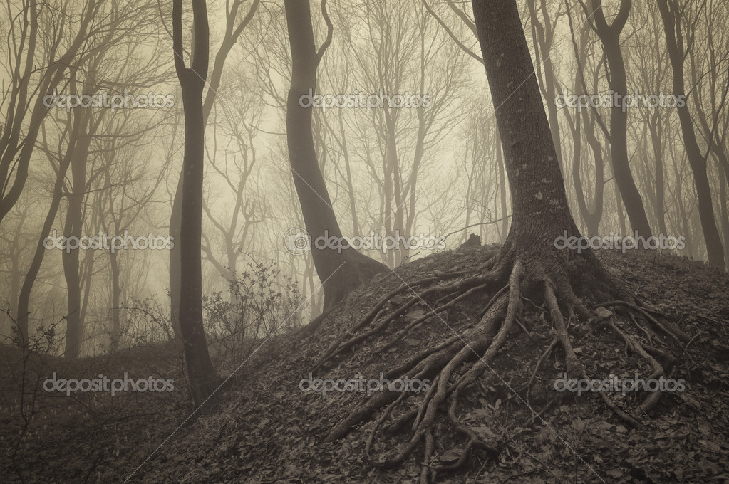 Фотообои Trees with visible roots in a misty forest