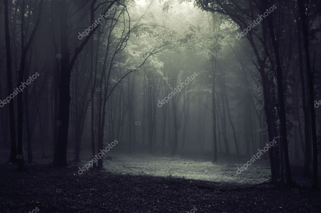 Фотообои Light in a dark forest creating a frame