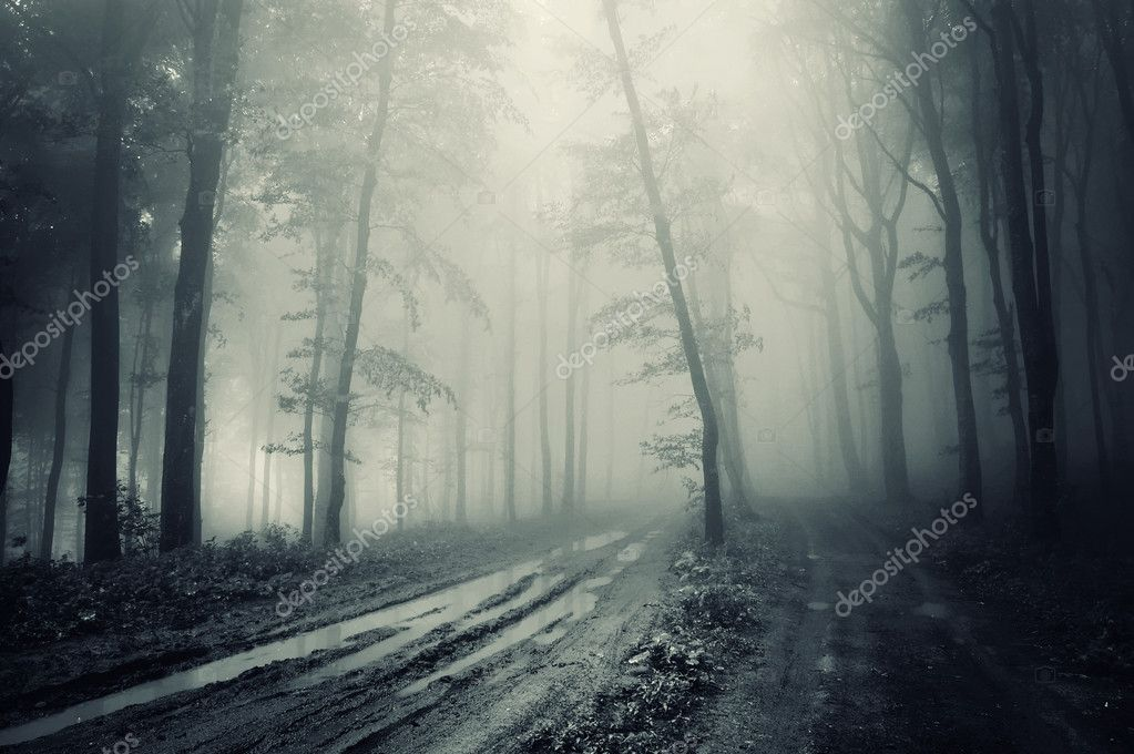 Фотообои Road through a spooky forest with fog