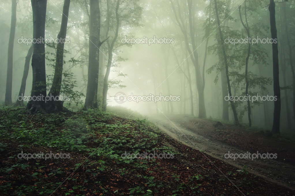 Фотообои A road through a forest with fog with rain