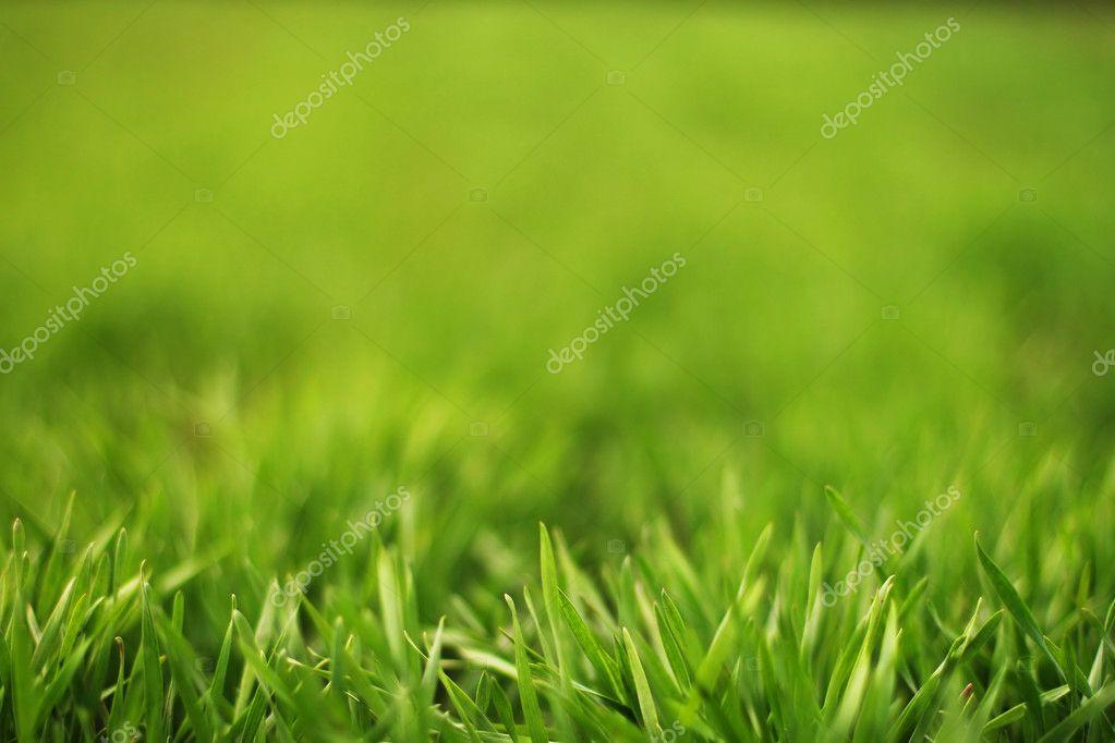 goca lazarevic trava zelena
