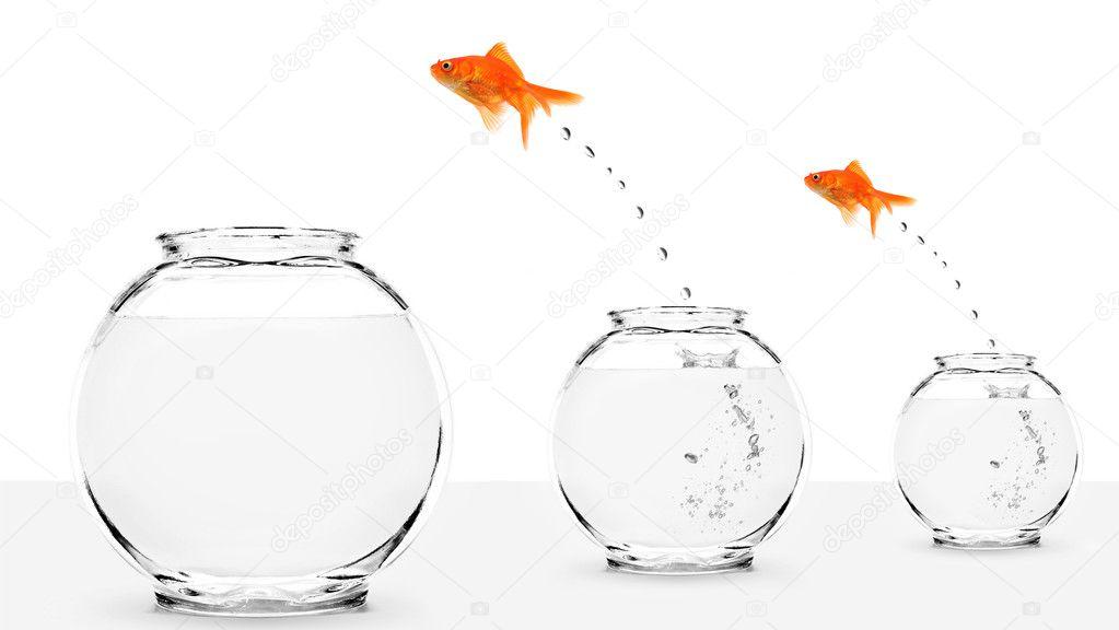 Due pesci rossi saltando a pi grande fishbowls foto for Pesci rossi prezzo