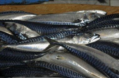 Sale of mackerel in a market.