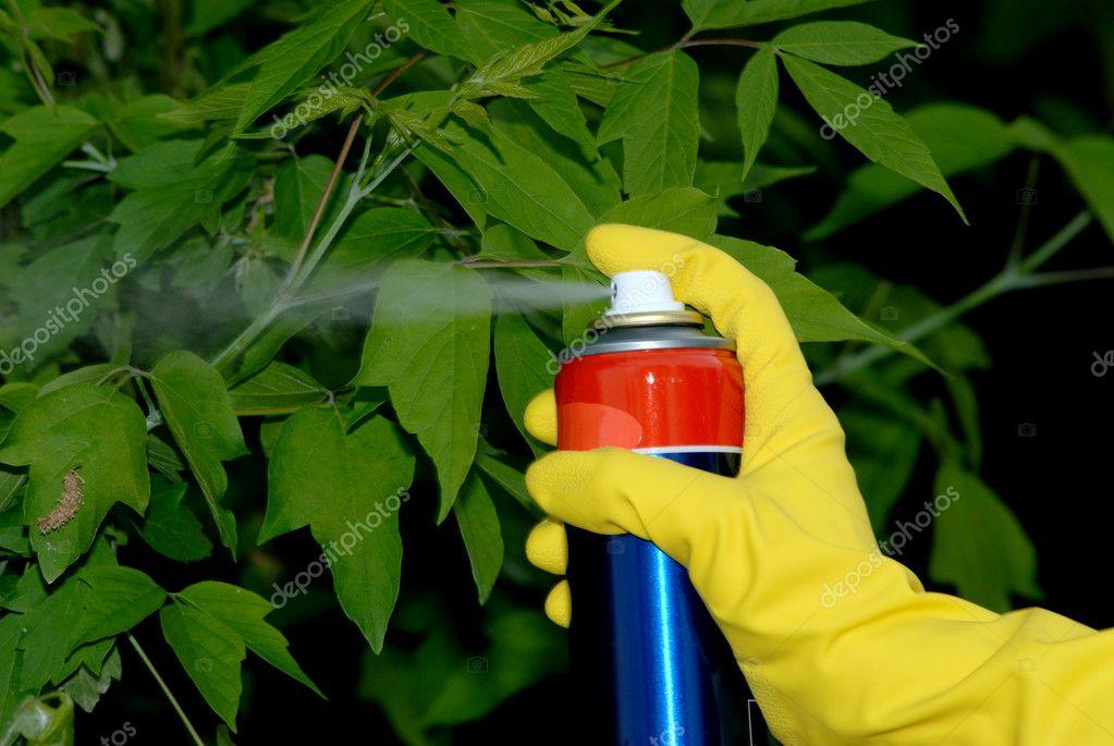 Pesticiding the garden