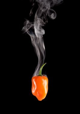 Smoking Hot Habanero Pepper (Capsicum Chinense)