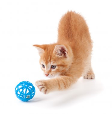 Cute orange kitten playing with a toy